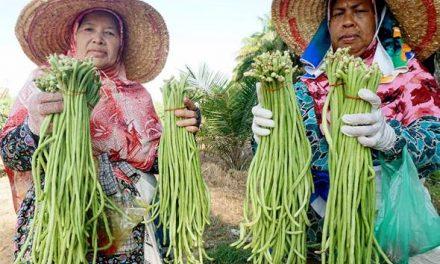 Tinggalkan kerjaya sebagai kontraktor, raih pendapatan lumayan sebagai petani